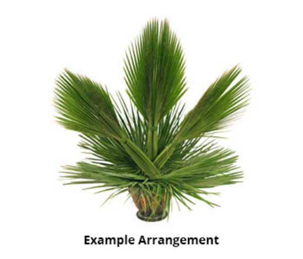 Palm Branches For Palm Sunday Fresh Palm Branches