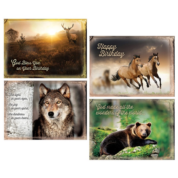 Wild adventures boxed cards birthday pack of 12 bookmarktalkfo Choice Image