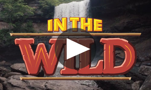 In The Wild VBS 2019 | LifeWay VBS 2019 | Concordia Supply